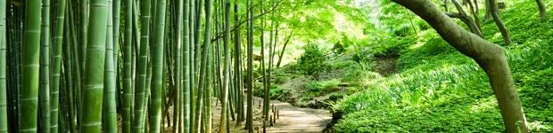 Bambou-jardin - Jardiniers Professionnels