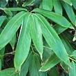 bambous-sasa - Professionnels A Domicile