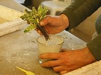 Maymou-savoir-faire - Jardiniers Professionnels