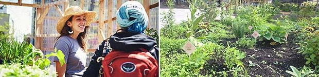 Jardins-Gamelin-potagers-urbains - Jardiniers Professionnels