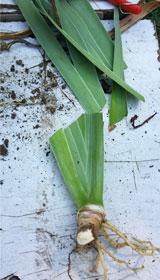 repiquage-iris - Professionnels A Domicile