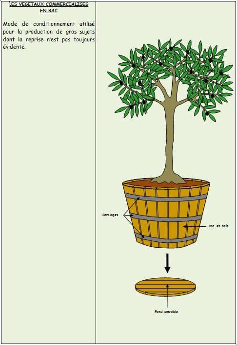 Végétaux-en-bac - Professionnels A Domicile