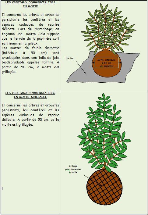 Végétaux-en-motte - Professionnels A Domicile