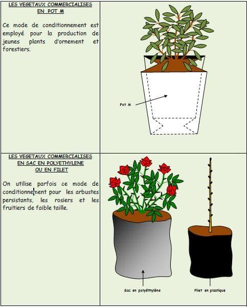 Végétaux-en-pot-M - Professionnels A Domicile