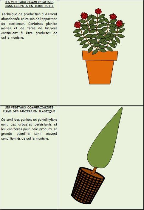 végétaux-en-pot - Professionnels A Domicile