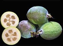 fruit-feijoa - Professionnels A Domicile