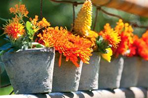 pot-terrasse-balcon - Jardiniers Professionnels