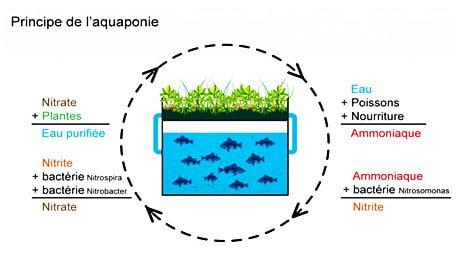 schéma-aquaponie - Professionnels A Domicile