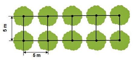 densités/plantation-carré - Professionnels A Domicile