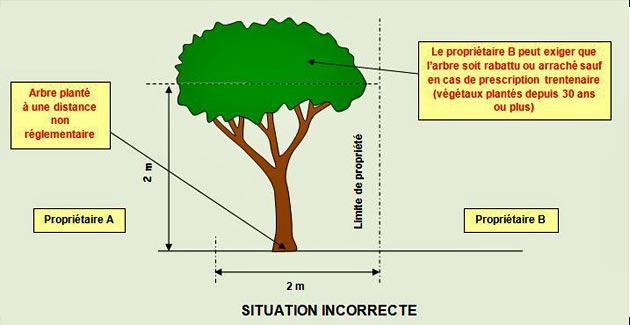 distance-arbres-propriétés - Professionnels A Domicile