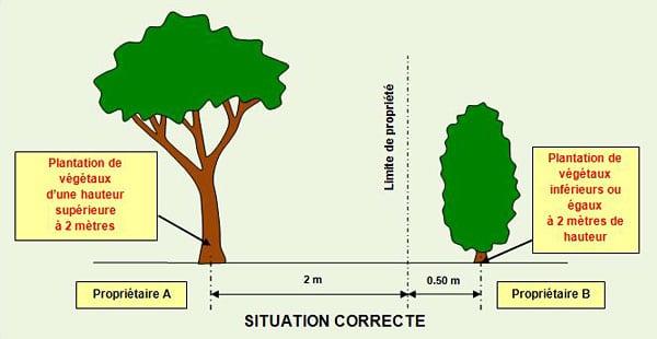 distance-plantation-arbres - Jardiniers Professionnels