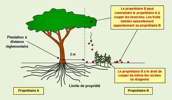 distance-plantation-débordement-propriété - Professionnels A Domicile