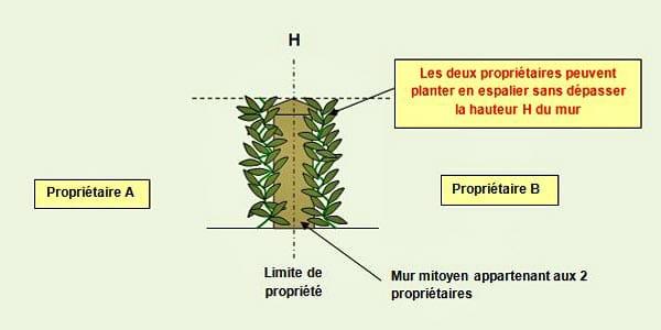 plantation-mur-mitoyen - Professionnels A Domicile