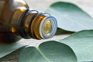 huile essentielle d'eucalyptus - Professionnels A Domicile