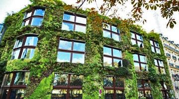 mur végétal de la façade du musée du quai Branly à Paris ; parcs et jardins contemporains depuis 1980 - Professionnels A Domicile