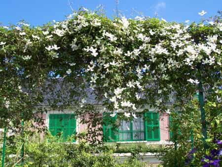 plante grimpante facade nord