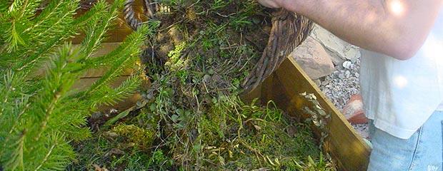 compost de Feuilles Mortes - Comment Broyer les Feuilles Mortes