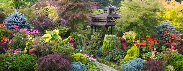 Plantes Jardins Japonais - Jardiniers Professionnels