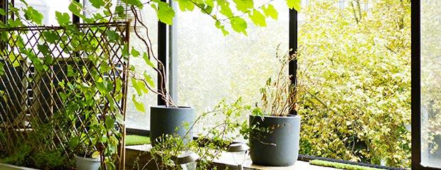 Entretien Plantes Interieur - Jardiniers Professionnels
