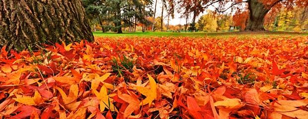 Que faire de nos Feuilles Mortes d'Automne - Tapis de Feuilles d'automne