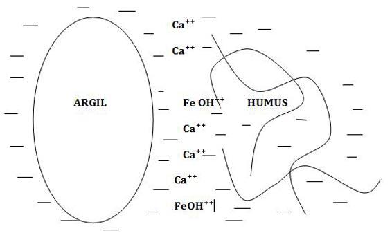 CAH-argile-humus - Professionnels A Domicile