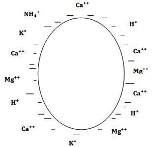 CAH-schéma - Professionnels A Domicile