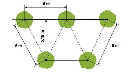 densités plantation quinconce écarts identiques
