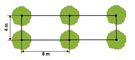 densités plantation rectangle