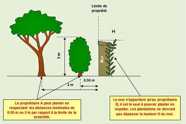 Respecter les distances de plantation pro a dom - Regles de construction en limite de propriete ...