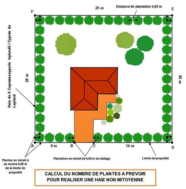 Distances et densit s de plantation des v g taux - Plantation cypres de leyland ...