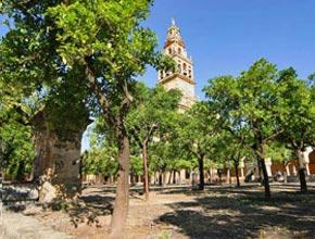 La mosquée de Cordoue cours des orangers