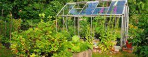 juin-travaux-jardinage-en-serre - Jardiniers Professionnels