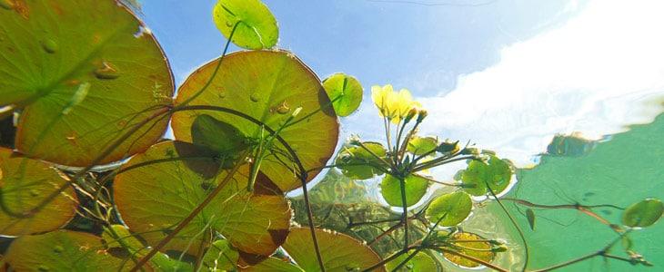 Comment entretenir son bassin en avril ? - Jardiniers Professionnels
