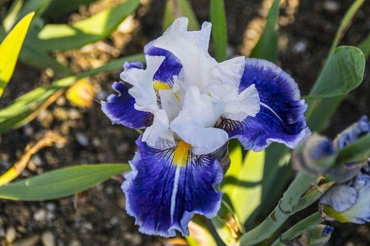 Fleurs de l 39 orchid e comment faire refleurir une orchid e - Comment couper la tige d une orchidee apres floraison ...