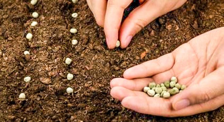 semis terre taupinières