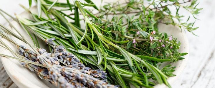 Plantes Aromatiques et Huiles Essentielles