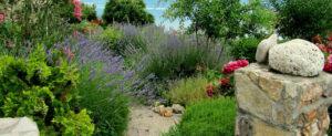 Plantes à Privilégier pour Jardinier dans le Midi