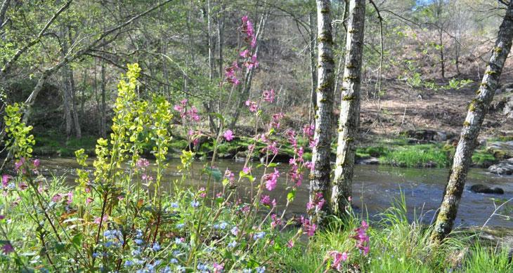 jardin remarquable à Crozant