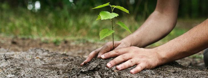 plantation jardin écologique