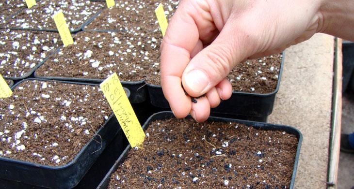 semis en pot