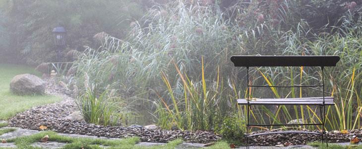 bassin de jardin en automne