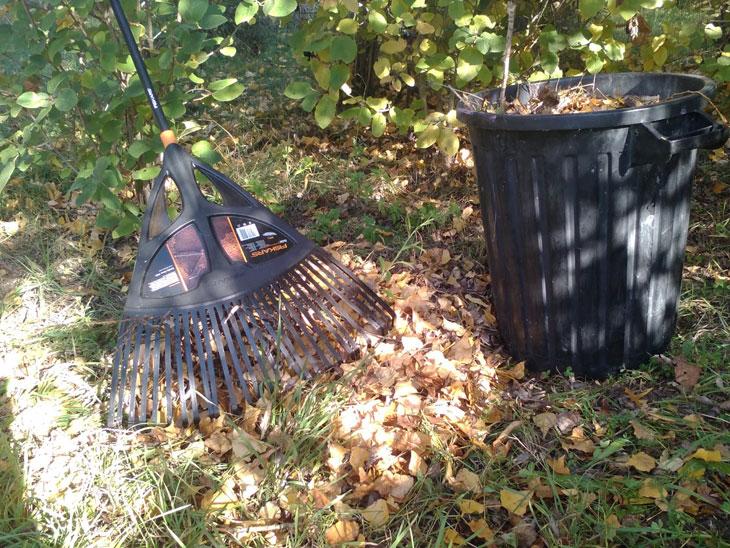 feuilles mortes potager en automne
