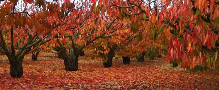 verger en automne