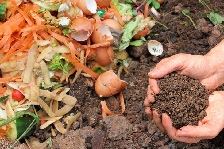 compost jardin gratuit