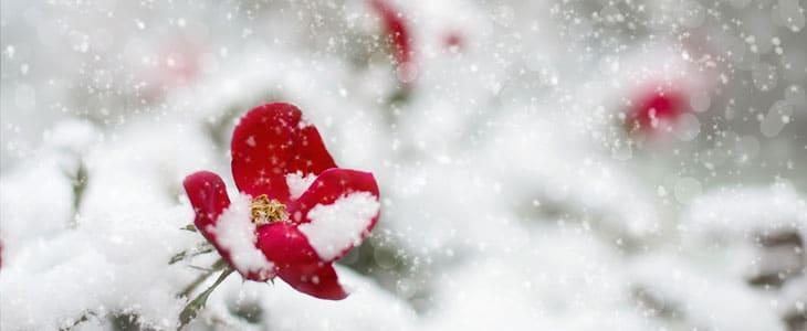 Comment Entretenir Ses Plantes Quand il Neige