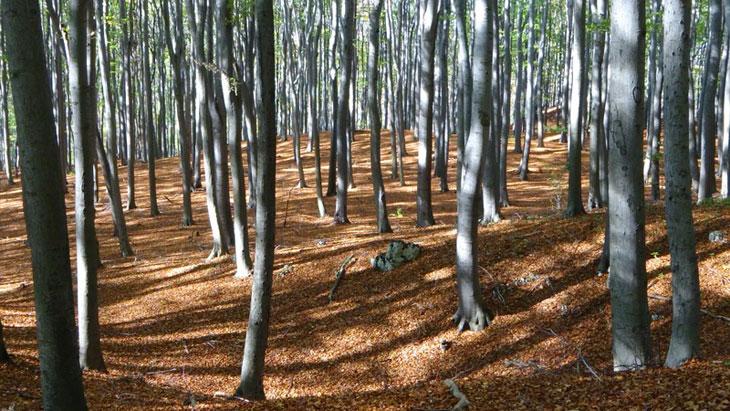 trous de plantation espacement des arbres