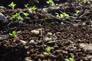 trous de plantation sol du jardin