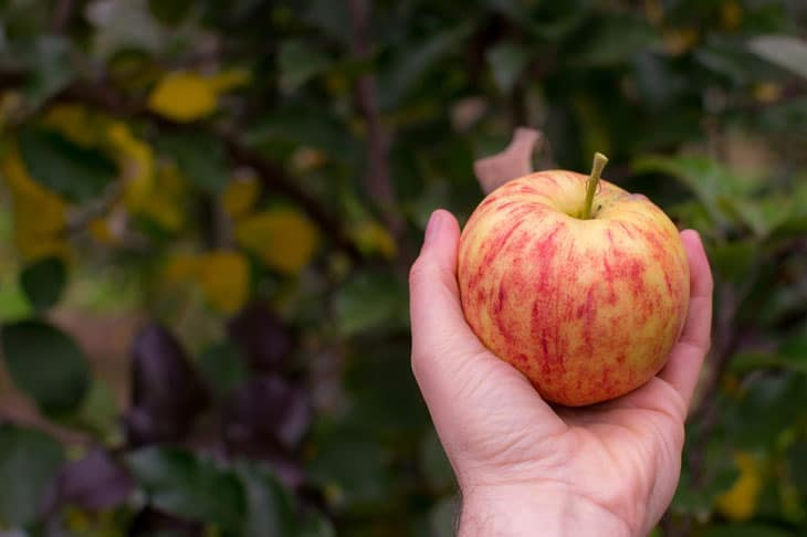 verger en hiver ramasser les fruits