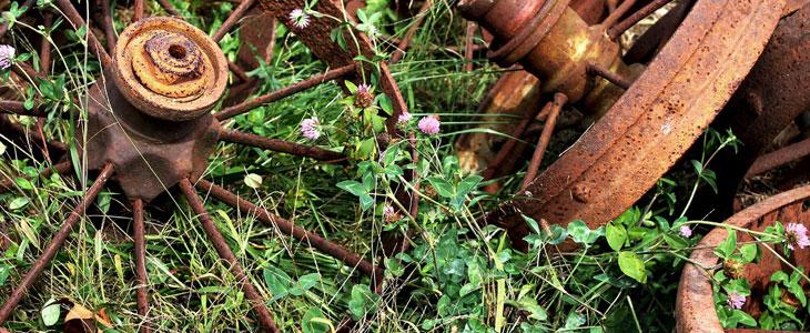 Reconnaitre les Mauvaises Herbes - Mauvaise Herbe Jardin