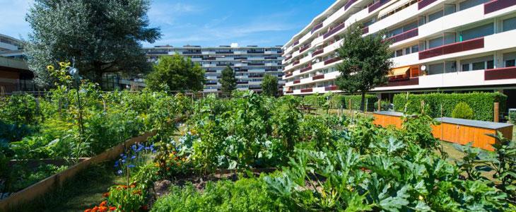 Agriculture Urbaine - Découvrez L'Agriculture Urbaine dans la Ville
